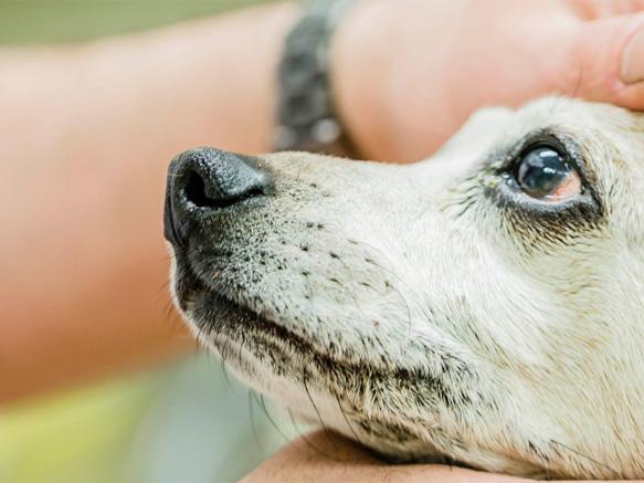 esek terei Állatorvosi Rendelo. » Bélférgek elleni kezelések
