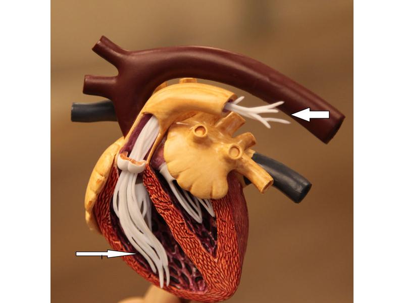 a szívféreg megelőző